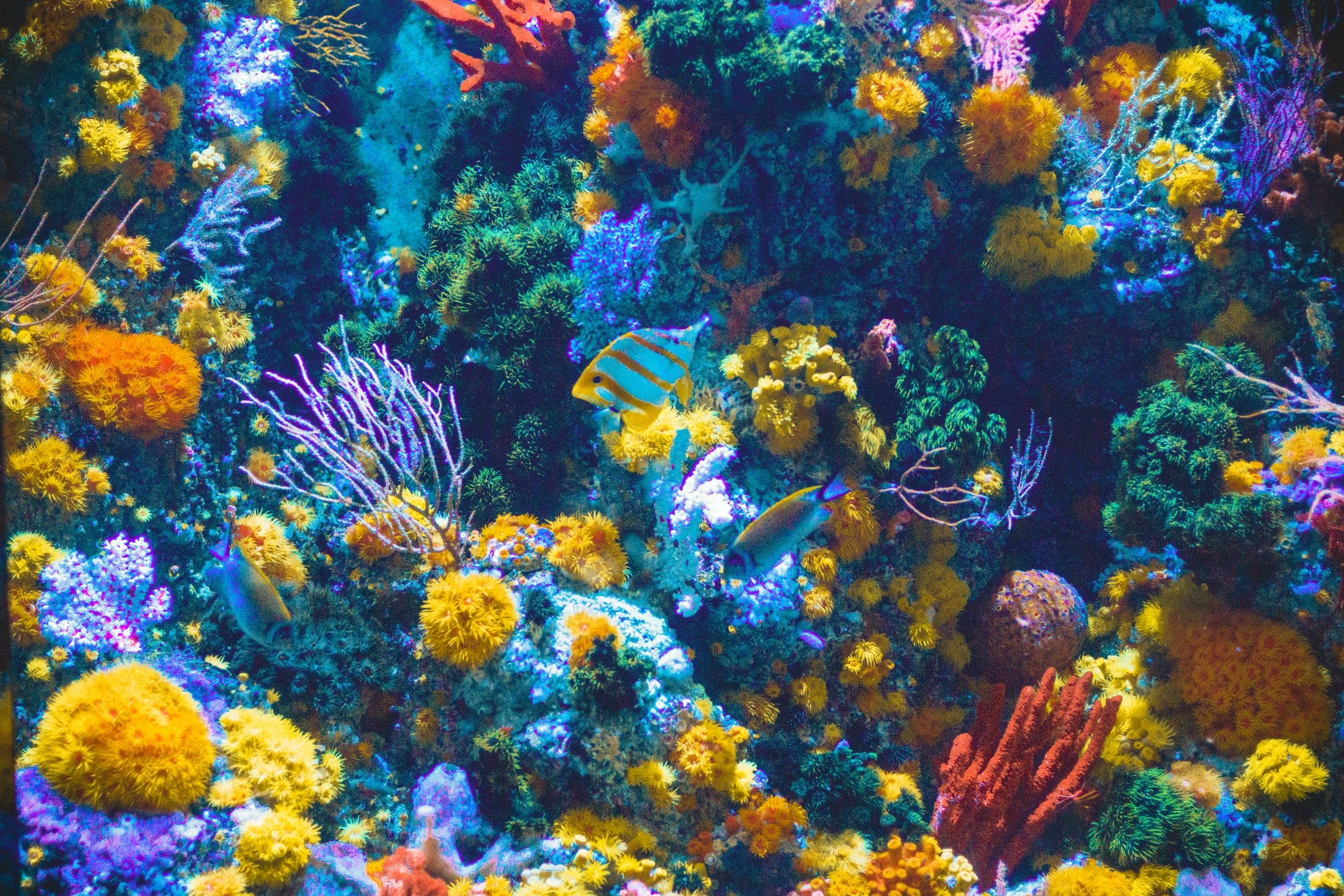 Is sunscreen killing off Coral Reef?